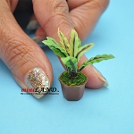 Handmade flowers plant in Terracotta Pot Dollhouse Miniatures FL064