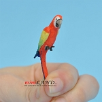 "Green Wing Macaw 1-3⁄4""H for 1:12 scale dollhouse miniature"