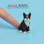 Boston Terrier dog for Dollhouse miniature 1:12 scale