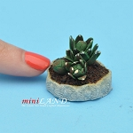Cactus, Azerus  for dollhouse miniatures 1:12 scale by CJ B