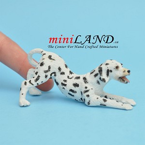 Playful Dalmation Dog for Dollhouse miniature 1:12 scale