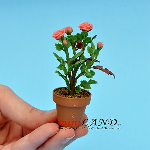 Roses In Pot - Pink for dollhouse miniature 1:12 scale