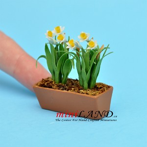 Daffodils White In Window Box for dollhouse miniature 1:12 scale
