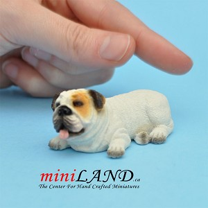 White bulldog dog for Dollhouse miniature 1:12 scale