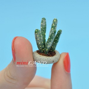 Cactus, Azerus for dollhouse miniatures 1:12 scale by CJ